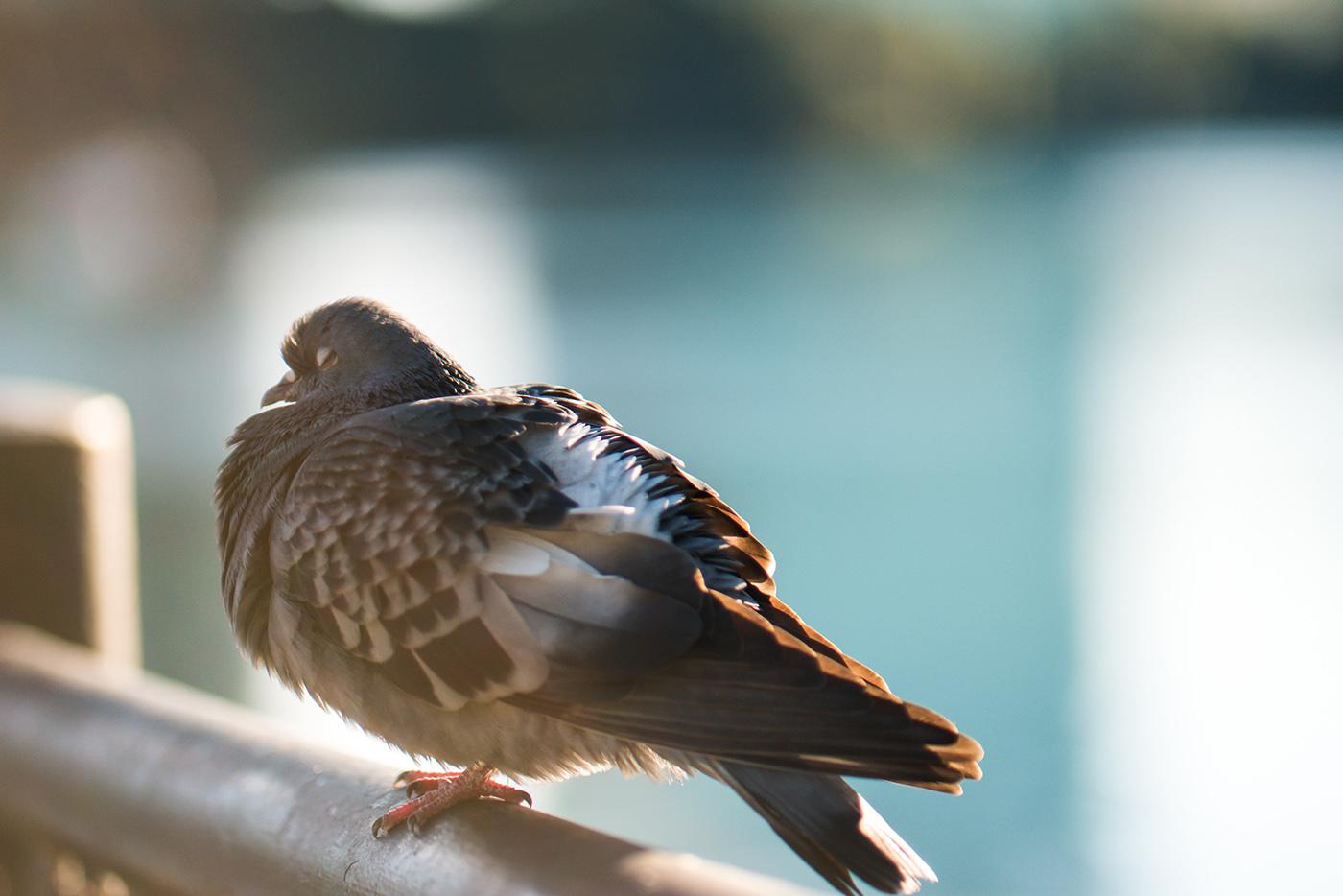 BUDOWA IREMONT MOTORWAY asprawa pewnego kaliskiego Gołębia.